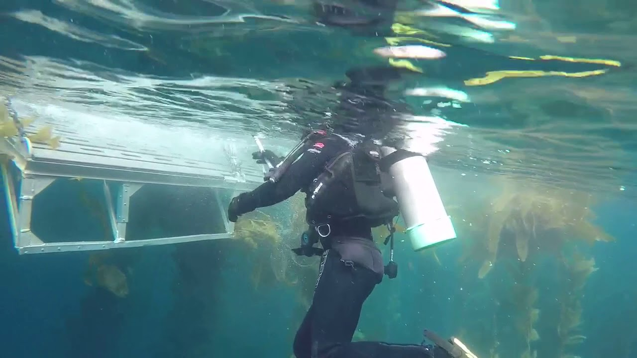 Ending the dive and climbing up the ladder on dive boat spectre ending the dive and climbing up the ladder on dive boat spectre anacapa island aug 2017 xflitez Images