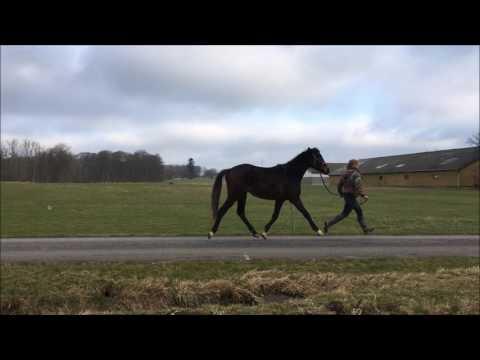 Donnatella skridt og trav på vej januar 2017