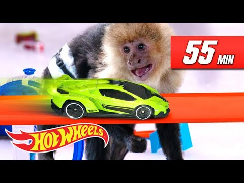 THE ULTIMATE FAST TRACK CAR LAUNCHING EXPERIENCE! | Fast Track | Hot Wheels