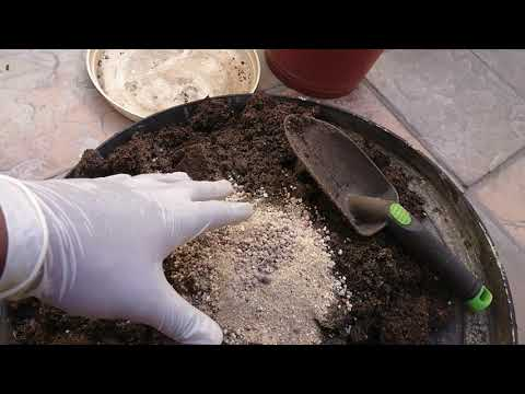 How To Grow Weed In South Africa Cape Town Day 1