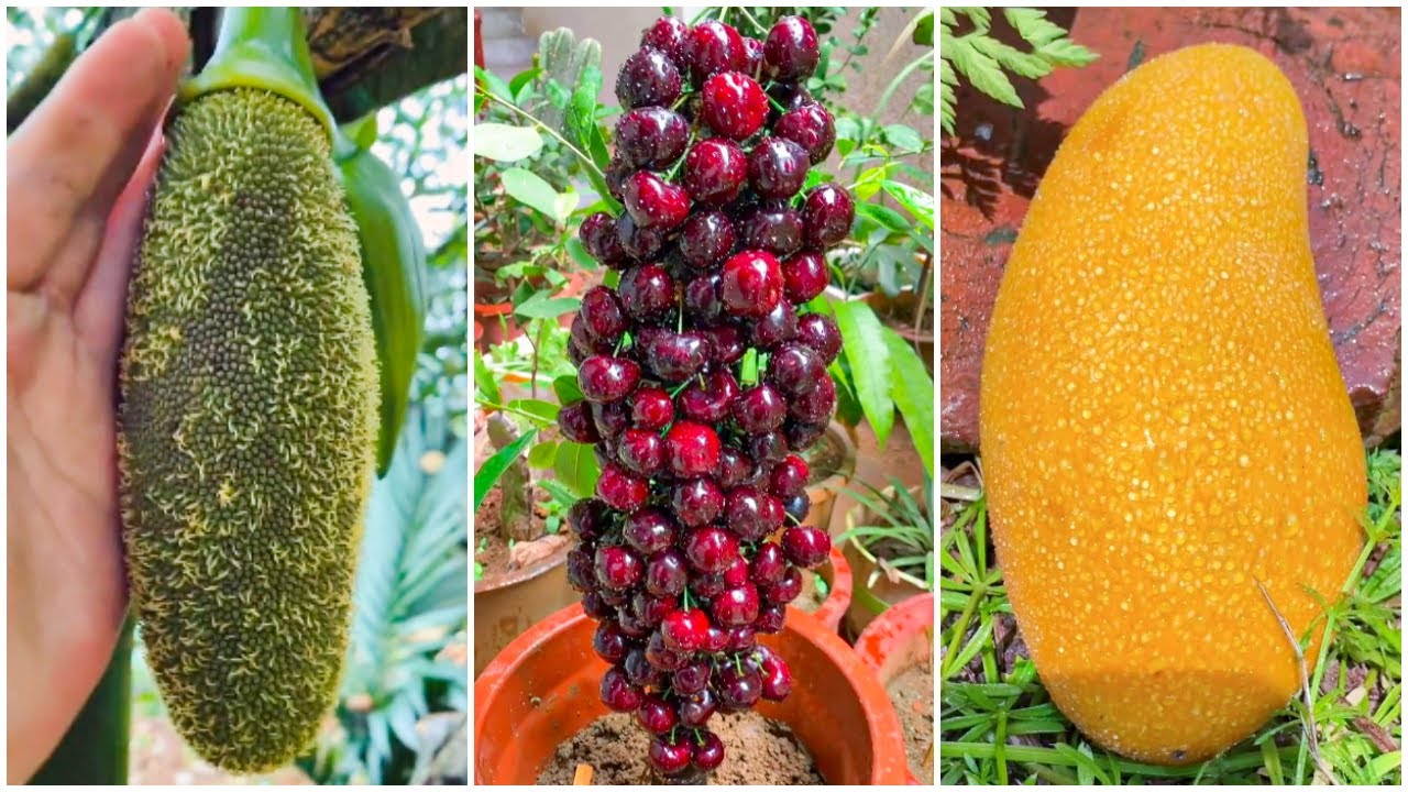 😍Farm Fresh Ninja Fruit   Tik Tok China   (Oddly Satisfying Fruit Ninja) #127