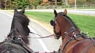 Horses butts passing neighborhood school