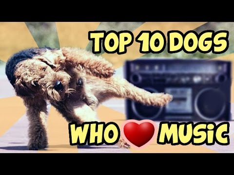 TOP 10 FUNNIEST DOGS WHO LOVE MUSIC