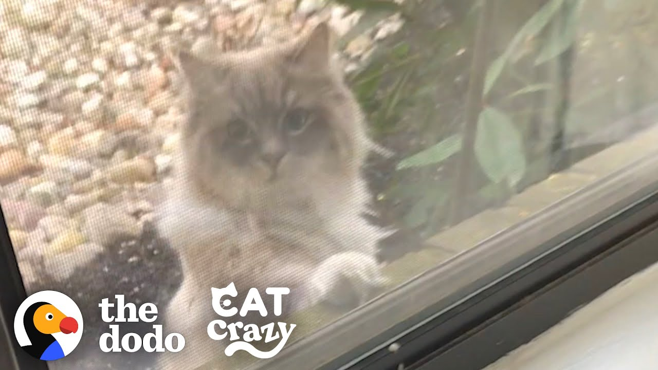 Cat Falls In Love...Or Not | The Dodo Cat Crazy