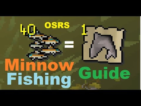 [OSRS] In-Depth Minnow Fishing Guide For Best Rates 600+ Sharks And 50K Fishing XP Per Hour