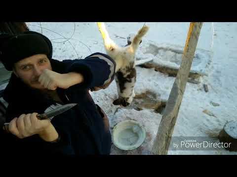 Как зарезать кролика?  Заготовка крольчатины в ЛПХ Бычковск.