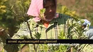 Orange farming restart at Nelliyampathy