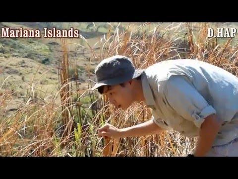 [D.HAP] Exploration to the Mariana islands
