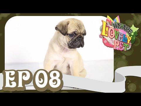 "We Are Lovely Pet - ""เพอซีเดค กับทองหยอดที่หายไป"" [Ep.8] 18+"