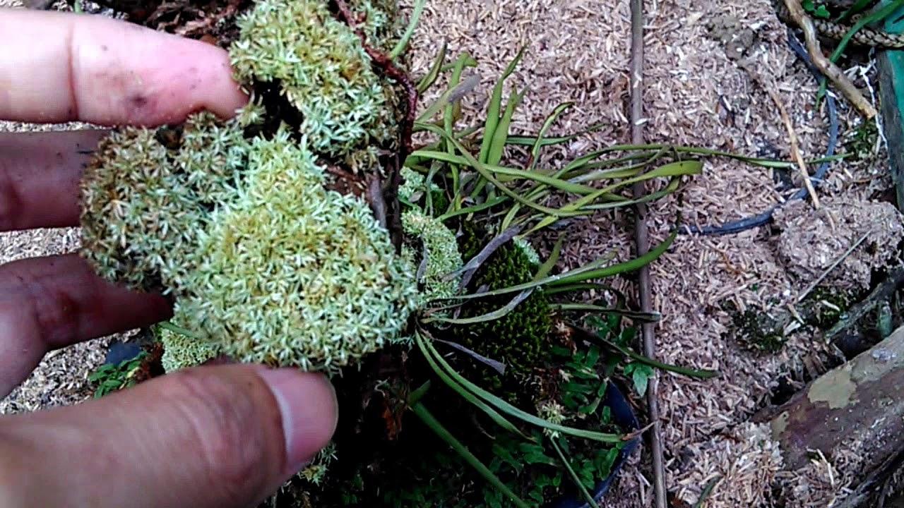 Mencari Tanaman Moss Aquascape Paludarium Di Alam Episode 2 Youtube