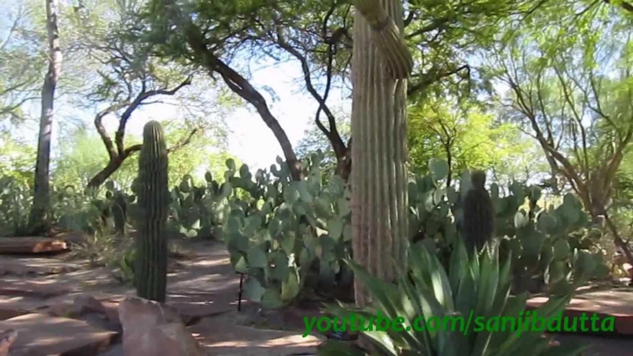 ethel m botanical cactus garden las vegas youtube