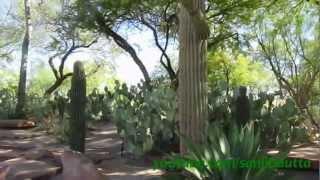 Ethel M Botanical Cactus Garden, Las Vegas