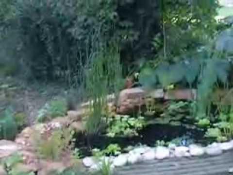 Mon premier bassin filtration par les plantes youtube for Achat plante bassin