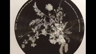 Gonno -  Short Days With The Orchid