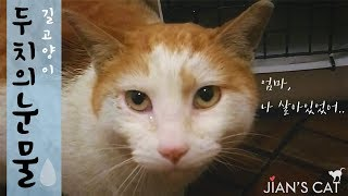(ENG SUB)A dying cat, The moment the cat met his mother and criedStray Cat rescue, a touching story