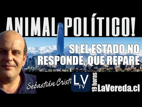 Si el Estado no responde, que repare - en Animal Político