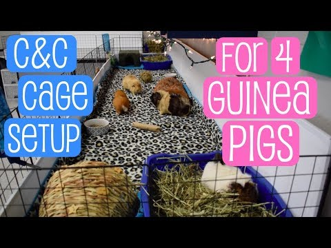 C&C Cage Setup for 4 Guinea Pigs