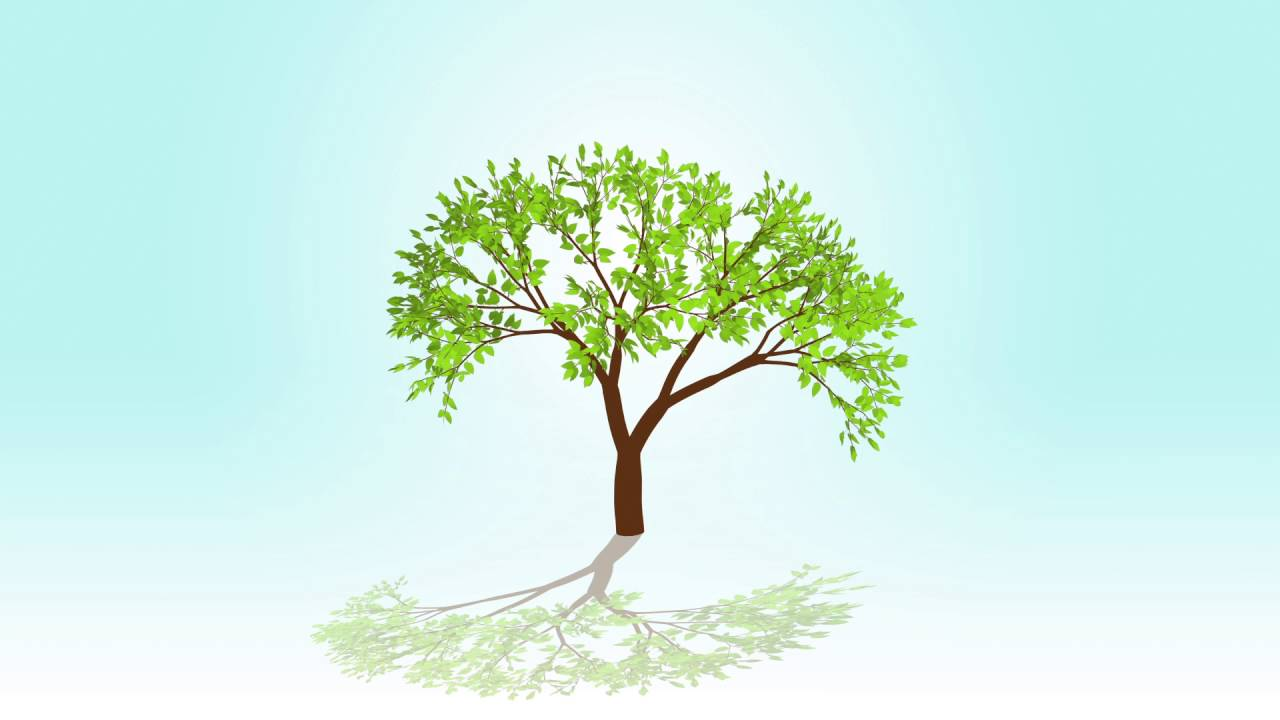 Quotes About Planting Seeds For Life Seed Growing Tree Animation Quote  Youtube
