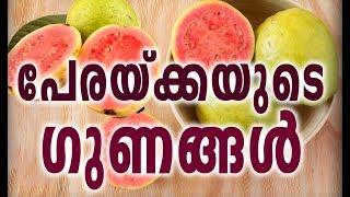 പേരക്കയുടെ ഗുണങ്ങൾ | The Amazing Health Benefits Of Guava | Malayalam Health Tips