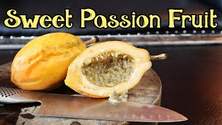Sweet Passionfruit From Colombia! (Passiflora alata) - Weird Fruit Explorer