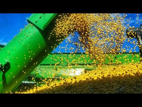 Broken Stuff and Soybean Harvest