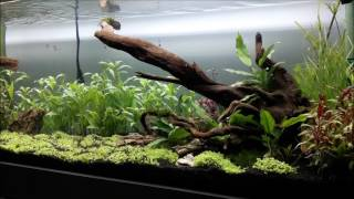 AQUASCAPING - HARDSCAPE