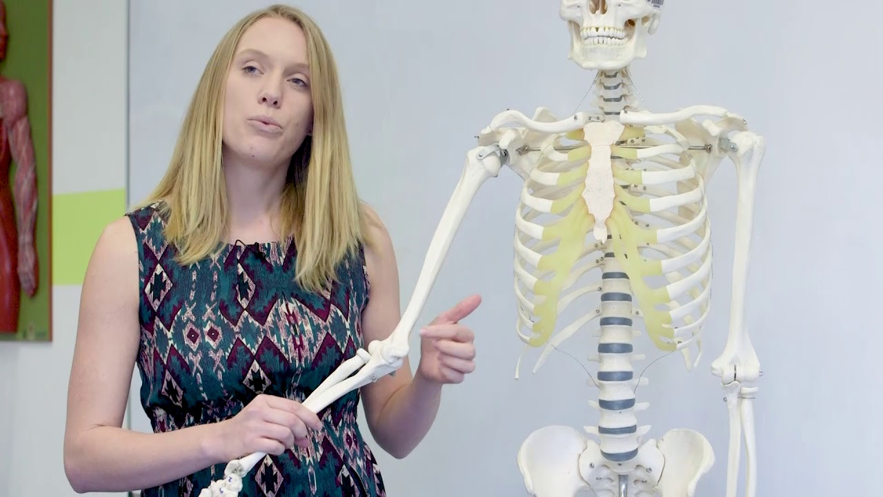 Understanding Anatomy - Funny bone - YouTube
