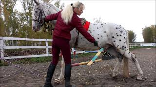 Дрессировка лошадей. Практические уроки. Трапеция, шпагат.