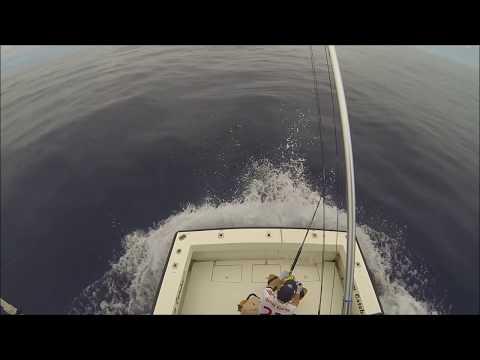 Dream Catcher 800 Pounds Blue Marlin