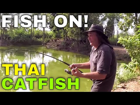 Fishing In Thailand For Catfish (Giant Mekong Catfish)
