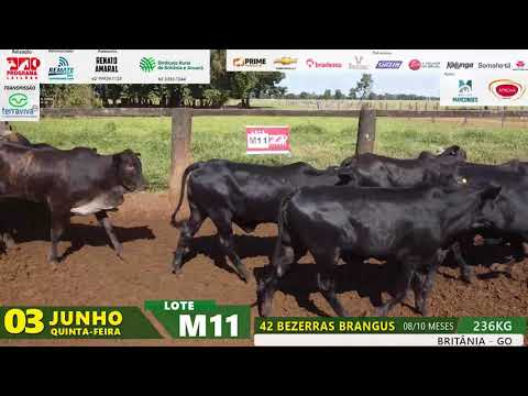 LOTE M11