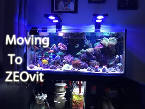 Transitioning to ZEOvit & Brighter Colors | Red Sea Reefer 350