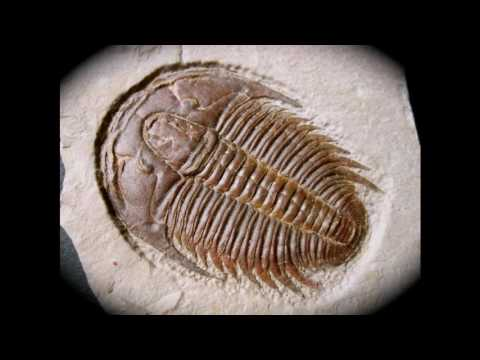 The Prehistory of Earth Made Easy: The Cambrian Period