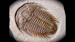 The Prehistory of Earth Made Easy The Cambrian Period