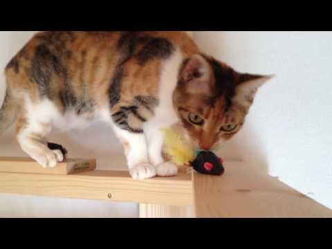 Diy catwalk for cats (1/2)