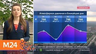 """Смотреть видео """"Утро"""": солнечная и теплая погода ожидается в Москве 21 мая - Москва 24 онлайн"""