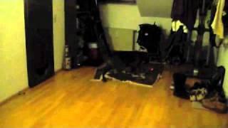 Boxer Chasing Laser Pointer thumbnail