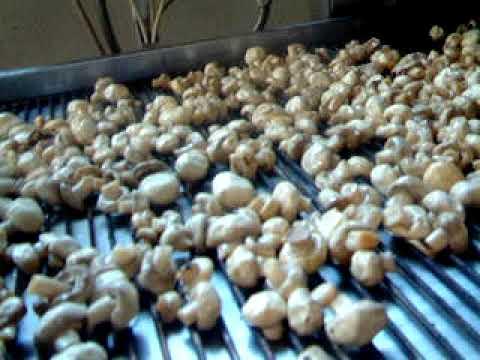 grigliatura champignon freschi