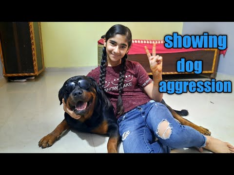 showing rottweiler dog aggression ||world's most dangerous dog rottweiler.