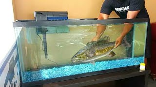 outdoor-aquarium-fish-kit-for-new-pet