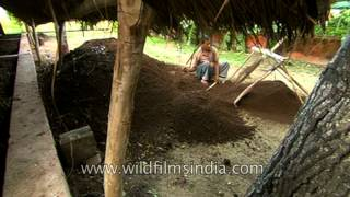 Vermicompost pit in rural Uttar Pradesh