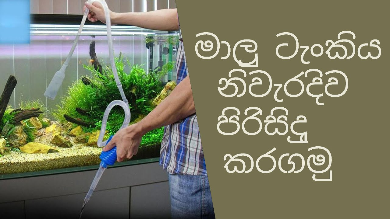 Download how clean a fish tank