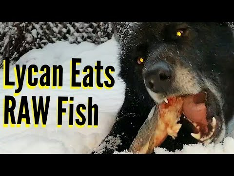 This Is What Happens When Dogs Swallow Fish Bones!!!