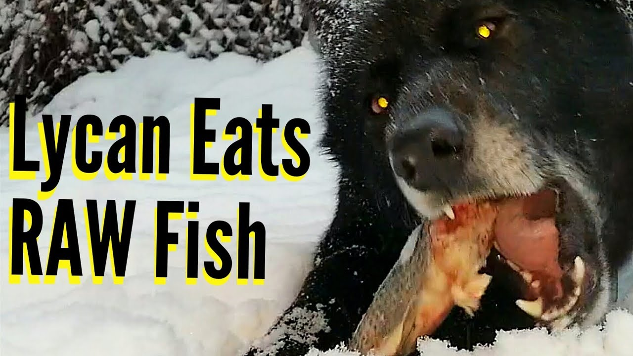 my dog ate fish bones