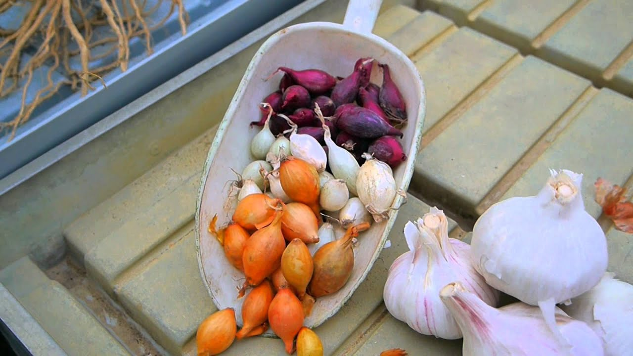 cosa piantare a novembre nel nostro orto savinivivai - youtube