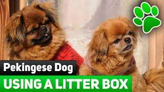 Teaching a Dog To Use a Litter Box - New Ideas On How To Train Pekingese To Use A Litter Box