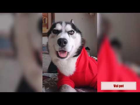 Học nhảy cùng sen - Funny action of dogs cat || Vui Pet Phần 2