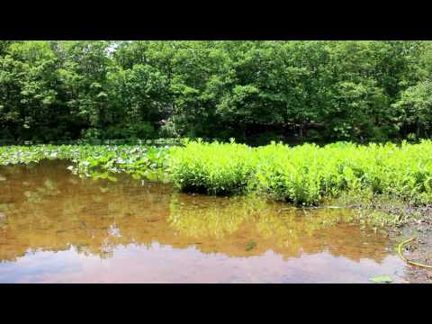 Pond at High Rock Park