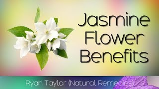 Jasmine Flower: Benefits and Uses