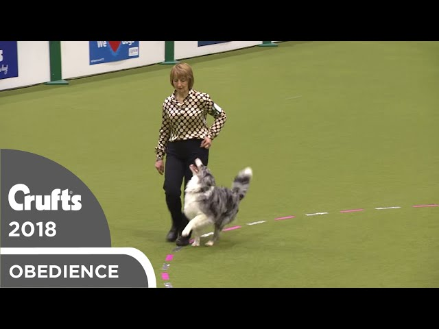 Obedience - Bitch Championship - Part 19 | Crufts 2018